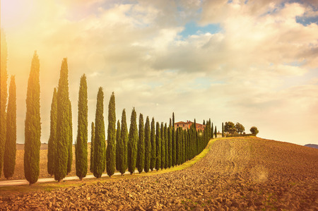 Tuscan cypress trees on the way home Archivio Fotografico