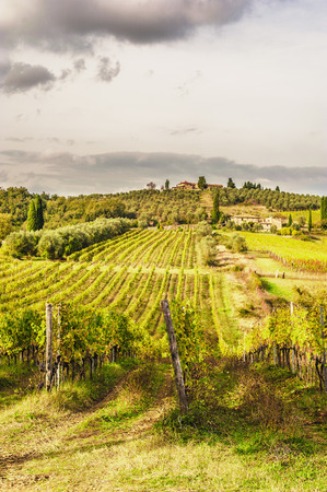 italian landscape: Fields of vineyards in the Italian landscape