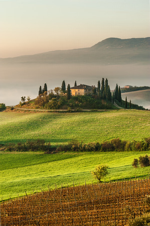 Mist flowing in the green fields of Tuscany in the morning