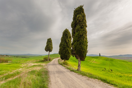 wrapped up: Fantastically wrapped up the road from the old cypress trees on the sides