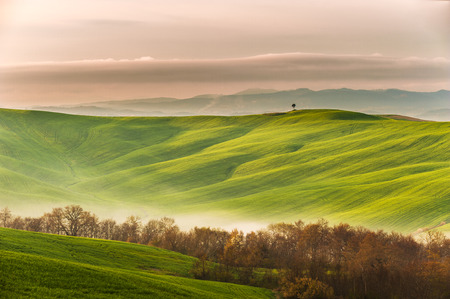 mists: Spring field with billowing mists Stock Photo