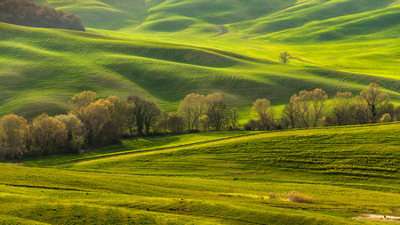 the gilding: Fresh spring green grass gilding in the light of sunset in the fields of Tuscany