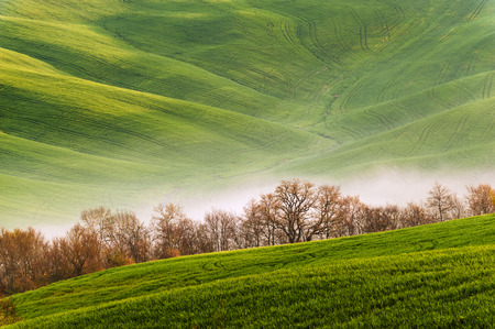 billowing: Spring field with billowing mists Stock Photo