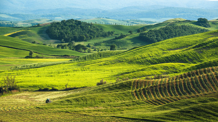green fields: Beautiful green fields in the the landscape of Tuscany