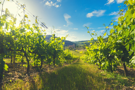antimo: Medieval church among vineyards in the sunny summer Tuscany, Montalcino Stock Photo