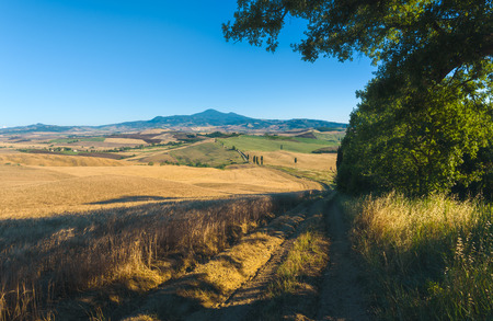 val dorcia: Summer field with cypress in Tuscan landscape in Val dOrcia