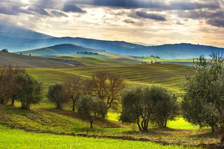 올리브 나무와 봄 풍경의 재배 스톡 콘텐츠
