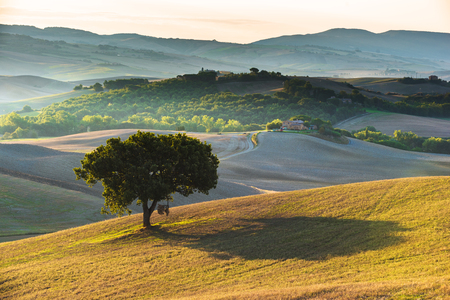 italian landscape: Large green tree on a summer field with the Italian landscape in the background.