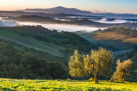 agriturismo: Trees and orchards on the Italian fields. Tuscany autumn day.