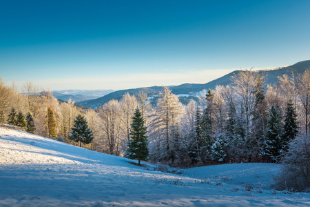 forest wood: Trees covered with snow in the mountains with long shadows. Stock Photo
