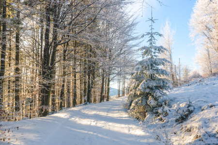 snows: Snows road in the mountains on a sunny and cold day
