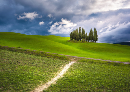 unearthly: Unearthly green landscapes of Tuscany, a group of cypress trees on a spring field. Stock Photo