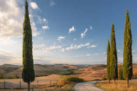 podere: Beautiful picturesque view of the road and cypress trees.