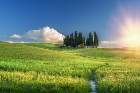 Cypress on the hill