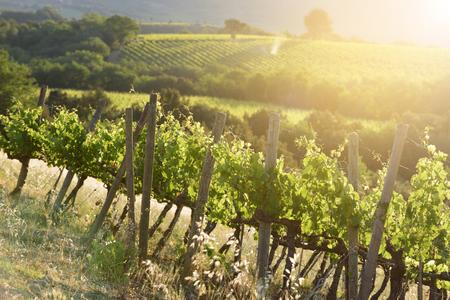 Surprising winery in the sun rising sun Stock Photo