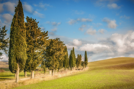 Tuscan country roads with Cypresses with blue cloudy sky in the background. Фото со стока