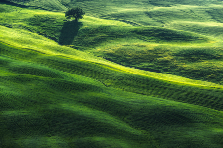 Green grassy spring landscapes with trees Фото со стока - 101276200