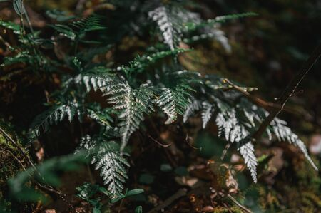 Forest fern in the light penetrating through the leaves of the trees 스톡 콘텐츠 - 146644782