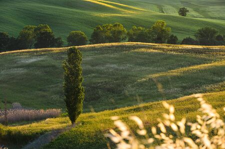 Spring fields on hills and sunset