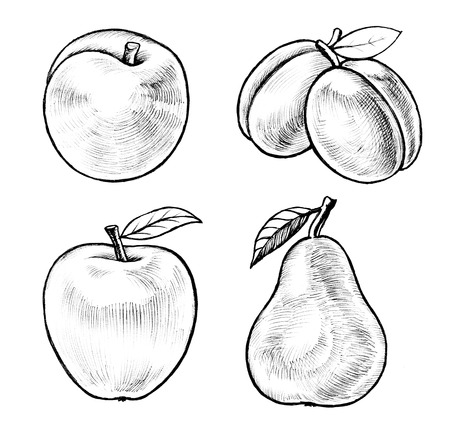 Ink drawing illustration of apple, pear, peach and plums