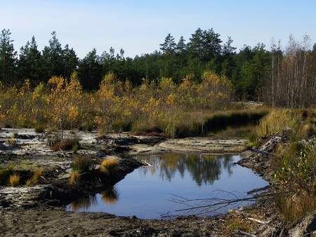 swampy: fall in a swampy forest Stock Photo
