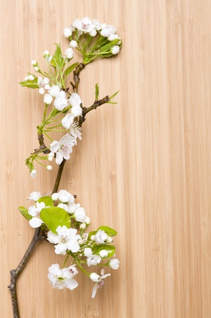 Background wood spring flower Stock Photo - 11035863