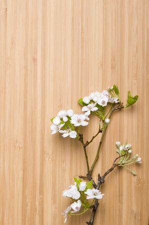 Background wood spring flower