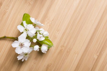 Background wood spring flower Stock Photo - 11035816
