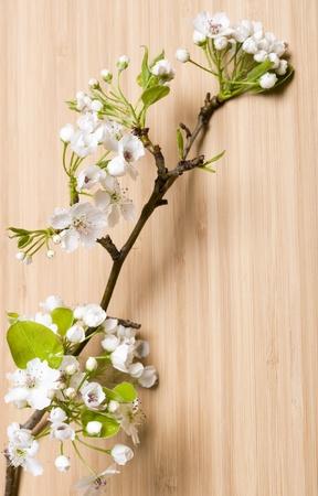 Background wood spring flower Stock Photo - 11035841