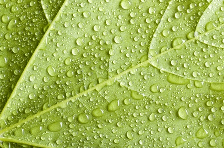 Background with green leaf covered water drops  版權商用圖片