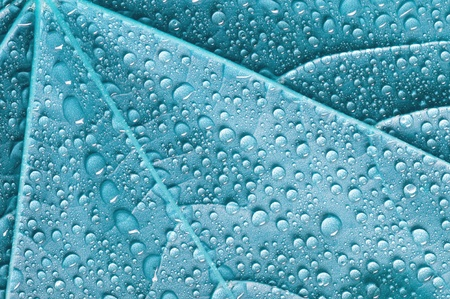 Background with blue leaf covered water drops
