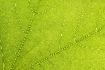 Background with green leaf ,nature abstract  Reklamní fotografie