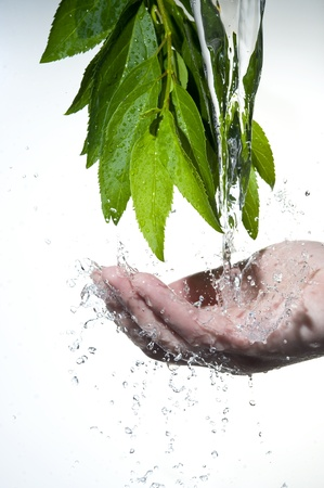 Flowing fresh water in palm and leaves
