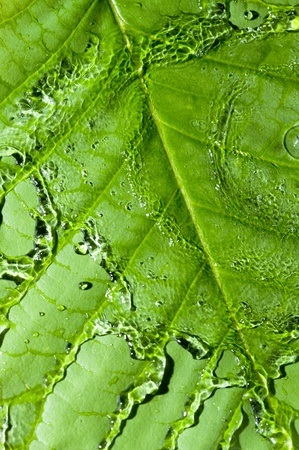 Background with green leaf  and water drops Фото со стока