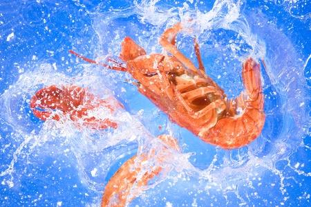 Lobster on the fresh blue  warer