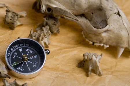 Compass with skull raccoon. Discovery  background  photo