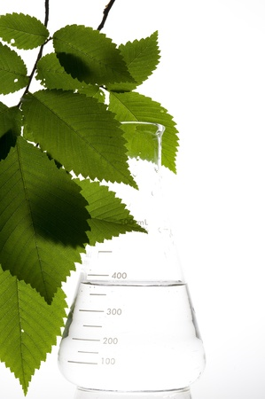 Retort and leaf on the white background
