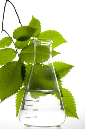 organic chemistry: Retort and leaf on the white background