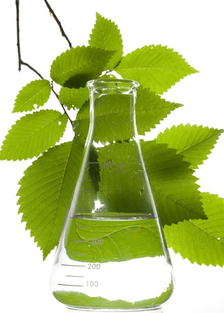 plant science: Retort and leaf on the white background