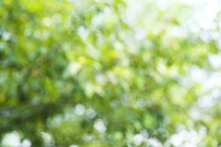 пышной листвой: Зеленый фон с пышной листвой Фото со стока