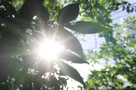 пышной листвой: Background green with lush foliage