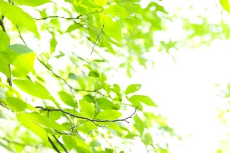 пышной листвой: Фон зеленый с пышной листвой