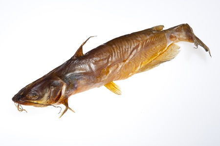 Sheat-fish isolated on the white