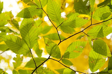 autum: Fall foliage. Autum background with leaves