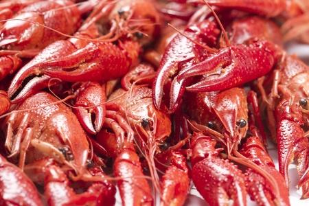 Red crayfish. Fresh seafood