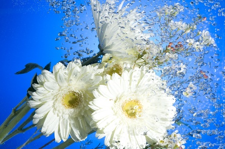 White Flower with water bubbles on blue background