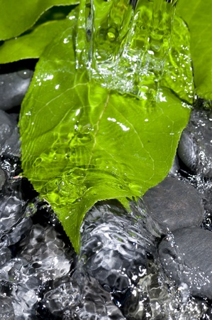 Green Leaf and splashing water. Nature background