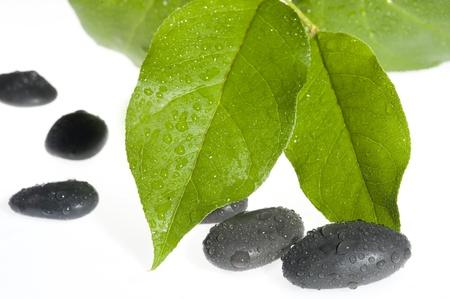 Flat shiny pebbles and leaf  isolate on white background  Zdjęcie Seryjne