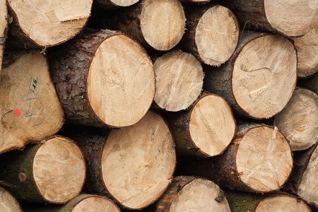 Pile of round tree logs prepare for fire photo
