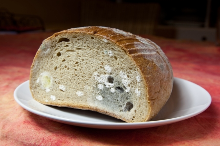 Bread covered in fuzzy green and white mould